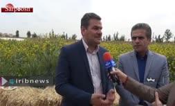 فیلم/ معاون امور دام وزارت جهاد کشاورزی: گوسفند دم دار هیچ مشکلی ندارد