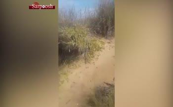 ویدئو/ هجوم چند صد میلیونی ملخ های پرنده عربستانی به ایران