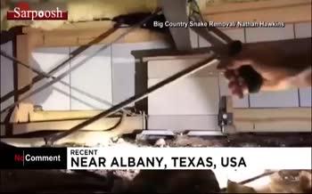 فیلم/ عملیات مارگیری در تگزاس