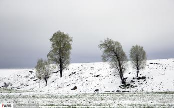 تصاویر برف بهاری در اردبیل,عکس های برف بهاری در اردبیل,تصاویر بارش برف