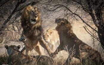 تصاویر منتخب حیات وحش هفته,عکس های حیوانات,تصاویری حیوانات مختلف در جهان