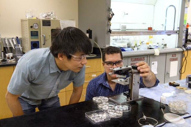 لنز جدید,اخبار علمی,خبرهای علمی,اختراعات و پژوهش
