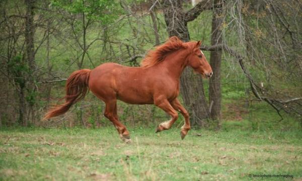 ساختار بدن اسب,اخبار دانشگاه,خبرهای دانشگاه,دانشگاه