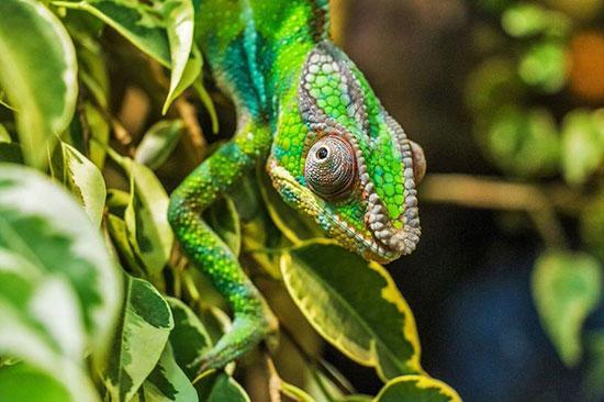 زیباترین حیوانات ماده جهان,اخبار جالب,خبرهای جالب,خواندنی ها و دیدنی ها