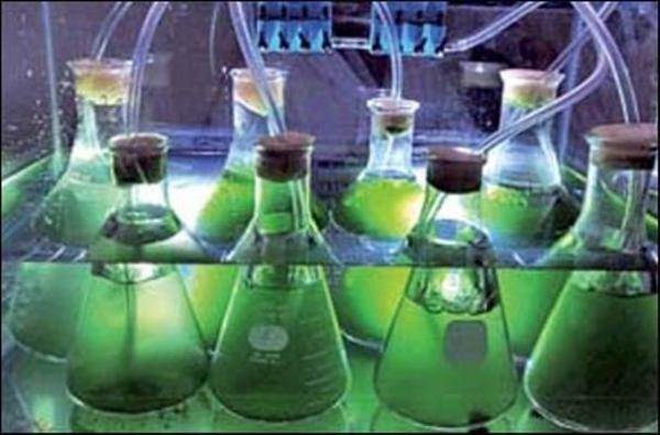 تولید سوخت پاک,اخبار علمی,خبرهای علمی,اختراعات و پژوهش