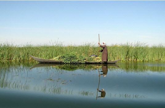 آبگیری تالابهای خوزستان,اخبار اجتماعی,خبرهای اجتماعی,محیط زیست