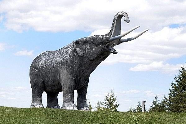 کشف استخوان حیوان,اخبار علمی,خبرهای علمی,طبیعت و محیط زیست