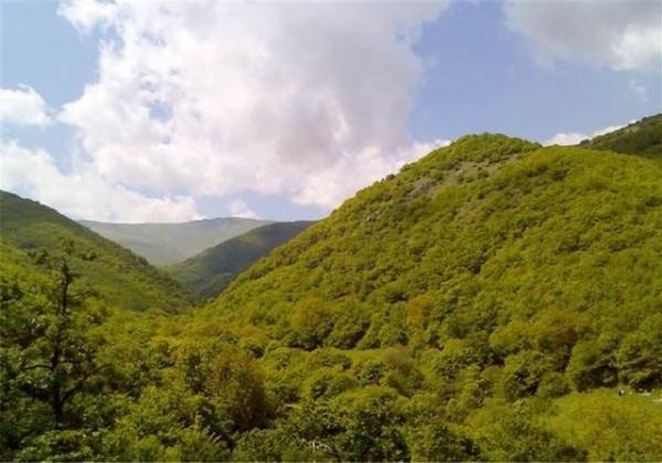 جنگل,اخبار علمی,خبرهای علمی,طبیعت و محیط زیست