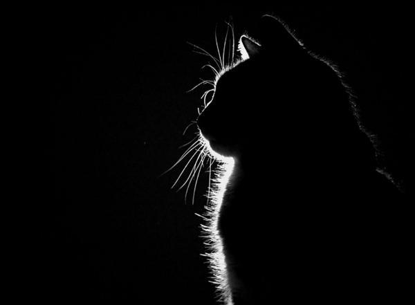 گربه ها,اخبار جالب,خبرهای جالب,خواندنی ها و دیدنی ها