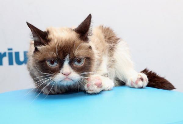 گربه اخمو,اخبار جالب,خبرهای جالب,خواندنی ها و دیدنی ها