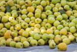 قیمت سیب زرد,اخبار اقتصادی,خبرهای اقتصادی,اقتصاد کلان