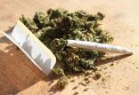 ماریجوانا,نهاد های آموزشی,اخبار آموزش و پرورش,خبرهای آموزش و پرورش