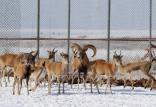 حیوانات باغوحشهای ایران,اخبار علمی,خبرهای علمی,طبیعت و محیط زیست