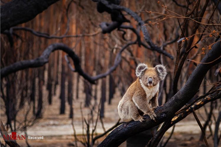 تصاویر برندگان مسابقه جهانی عکاسی طبیعت ۲۰۱۹,تصاویر طبیعت,عکس های دیدنی از حیوانات