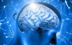 فعالیت مغز,اخبار پزشکی,خبرهای پزشکی,تازه های پزشکی