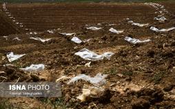 تصاویر مزارع پلاستیکی,عکس هایی از پلاستیک ها در مزارع,تصاویر نامناسب از مزارع