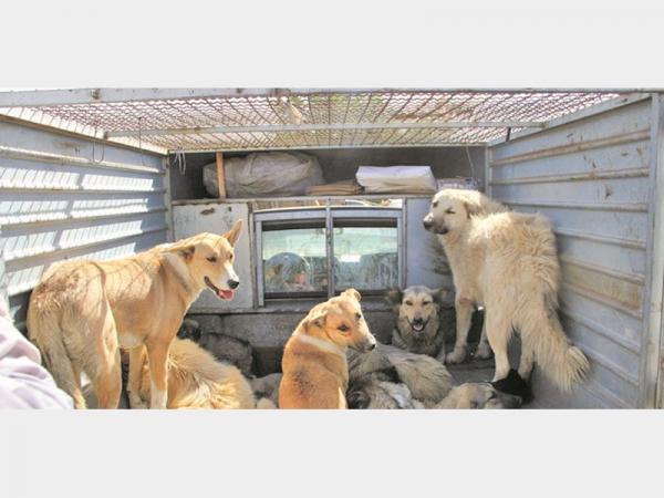 جمع آوری سگ های ولگرد,اخبار پزشکی,خبرهای پزشکی,بهداشت
