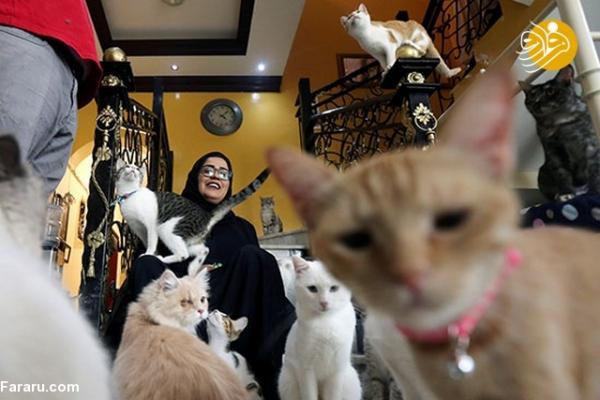 پناهگاه گربهها,اخبار جالب,خبرهای جالب,خواندنی ها و دیدنی ها