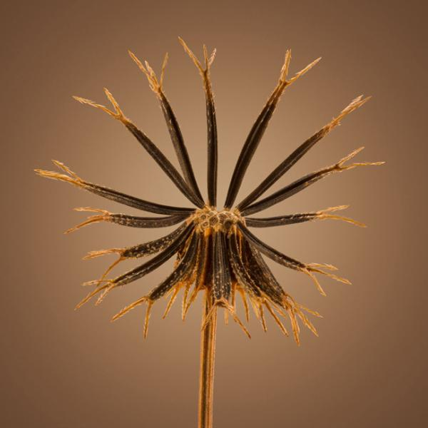 جزئیات پنهان در دانه گیاهان,اخبار جالب,خبرهای جالب,خواندنی ها و دیدنی ها