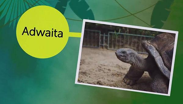 پیرترین حیوانات,اخبار جالب,خبرهای جالب,خواندنی ها و دیدنی ها