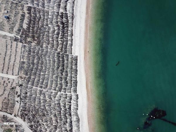 جزیره داکین,اخبار جالب,خبرهای جالب,خواندنی ها و دیدنی ها