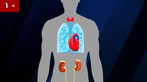 بدن انسان,اخبار پزشکی,خبرهای پزشکی,بهداشت