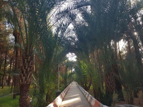 خوزستان کوچک یزد,اخبار اجتماعی,خبرهای اجتماعی,محیط زیست
