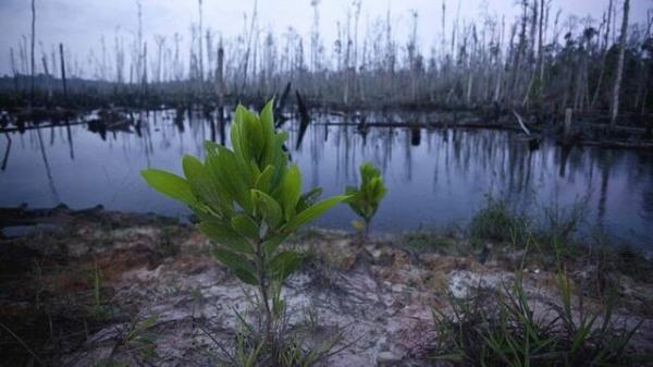 انقراض گونه های گیاهی,اخبار علمی,خبرهای علمی,طبیعت و محیط زیست