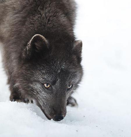 حیوانات شگفت انگیز,اخبار علمی,خبرهای علمی,پژوهش