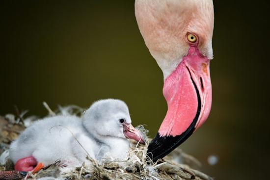 حیواناتی که شبیه والدین خود نیستند,اخبار جالب,خبرهای جالب,خواندنی ها و دیدنی ها