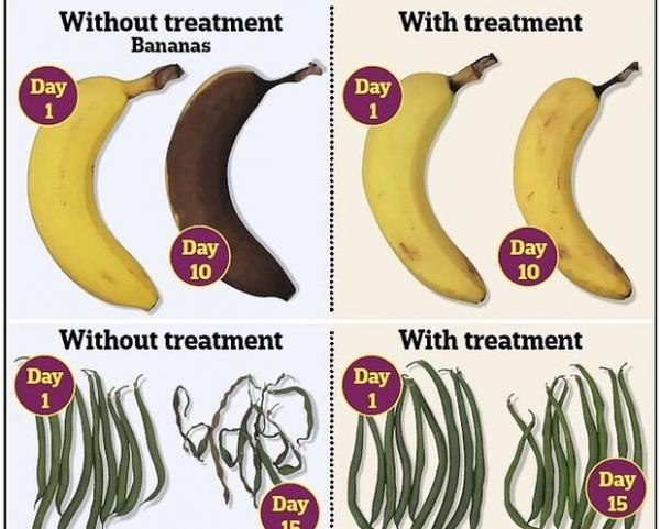 جلوگیری از فساد میوه و سبزیجات,اخبار علمی,خبرهای علمی,طبیعت و محیط زیست