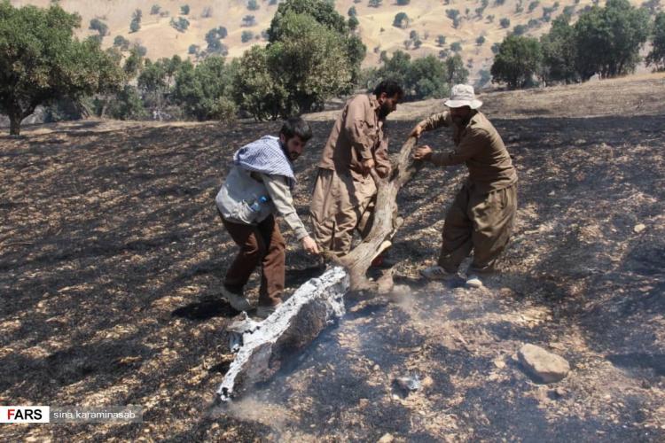 تصاویر آتش سوزی جنگلهای بخش چوار,عکس های آتش سوزی جنگل های زاگرس,تصاویر حوادث طبیعی