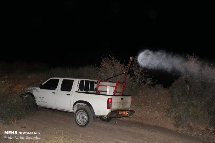 تصاویر مبارزه شبانه با ملخ های صحرایی,عکس های مبارزه شبانه با ملخ های صحرایی,تصاویر ملخ های صحرایی در هرمزگان