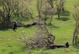 مأموران یگان حفاظت منابع طبیعی,اخبار علمی,خبرهای علمی,طبیعت و محیط زیست