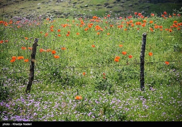 تصاویر طبیعت سوباتان,عکس های طبیعت سوباتان,تصاویرسوباتان درغرب لیسار