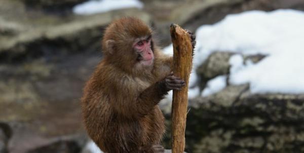 کشف فسیل میمون,اخبار جالب,خبرهای جالب,خواندنی ها و دیدنی ها