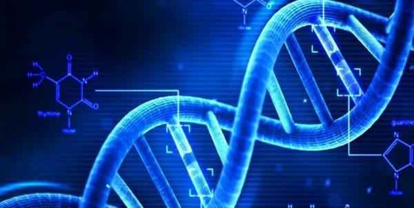 کشف دلائل ژنتیکی بی اشتهایی