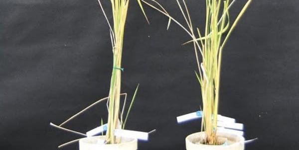 گیاهان,اخبار علمی,خبرهای علمی,طبیعت و محیط زیست