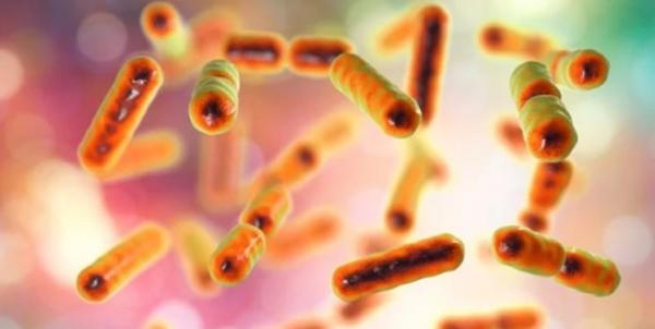 باکتریهای قلدر,اخبار پزشکی,خبرهای پزشکی,تازه های پزشکی