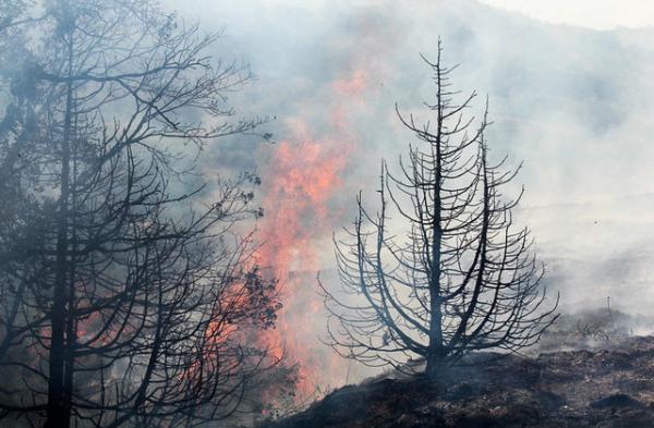 آتش سوزی در جنگلها,اخبار علمی,خبرهای علمی,طبیعت و محیط زیست