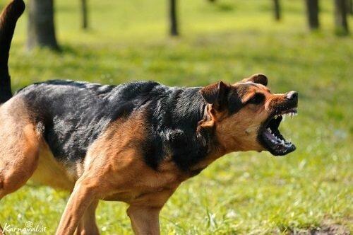 سگ,اخبار حوادث,خبرهای حوادث,حوادث امروز