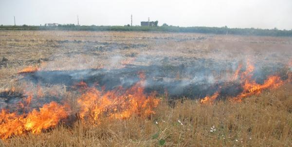 جریمه برای آتش زدن زمین کشاورزی,اخبار اجتماعی,خبرهای اجتماعی,محیط زیست