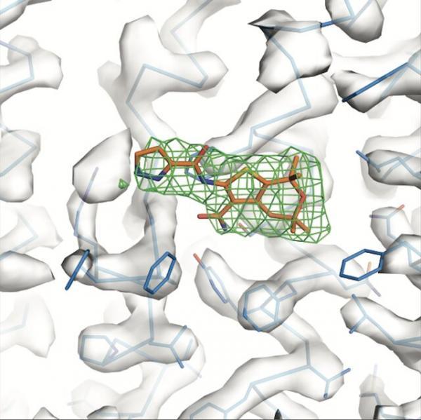 درمان فیبروز سیستیک با کمک پروتئین,اخبار پزشکی,خبرهای پزشکی,تازه های پزشکی
