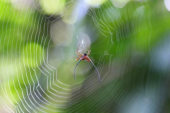 عجیب ترین عنکبوت های جهان,اخبار جالب,خبرهای جالب,خواندنی ها و دیدنی ها