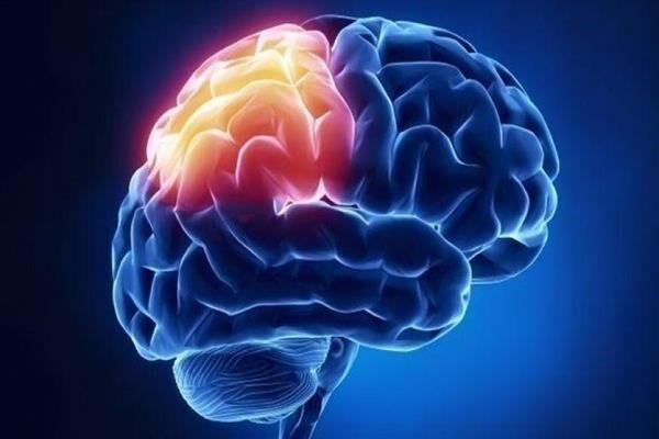 مغز,اخبار پزشکی,خبرهای پزشکی,تازه های پزشکی