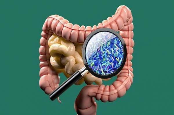 میکروب روده,اخبار پزشکی,خبرهای پزشکی,تازه های پزشکی