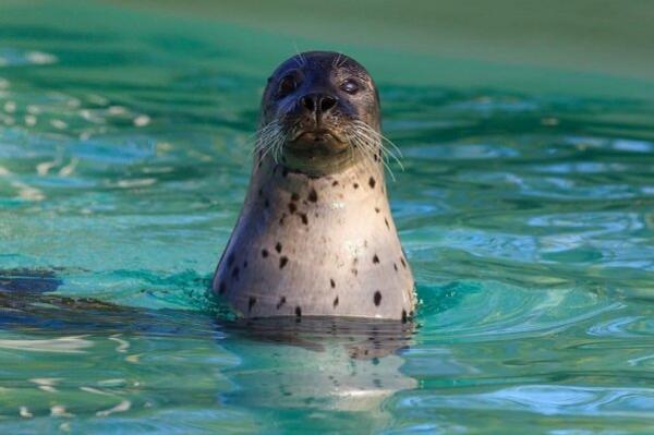 فک های دریایی,اخبار علمی,خبرهای علمی,طبیعت و محیط زیست