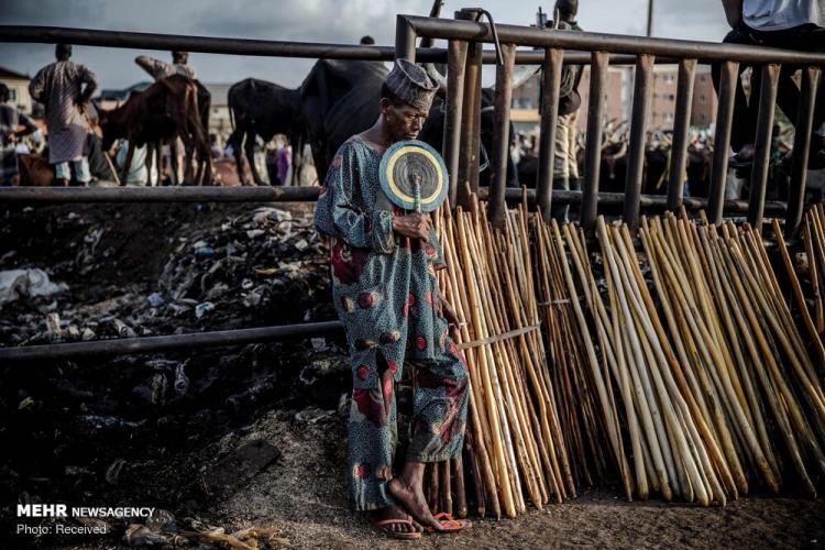 تصاویر دامپروری در نیجریه,عکس های دیدنی از جهان,تصاویر مردم نیجریه