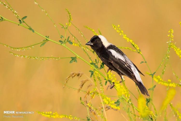 تصاویر برندگان مسابقهعکاسیآدوبون,تصاویر طبیعت,عکس های دیدنی از حیوانات