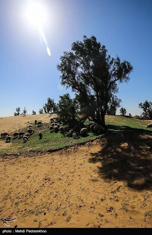 تصاویر طبیعت بیابان الهایی,عکس های طبیعت بیابان الهایی,تصاویر تپه های شنی و جنگلی